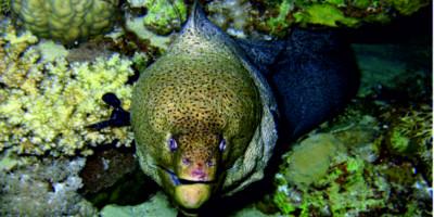 Риф Короля Абдуллы (Кing Abdulla reef)