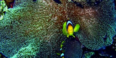 Радуга риф (Rainbow reef)